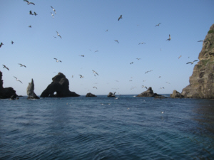 Sea level between Dokdo's East and West Islands
