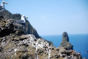 독도 獨島 竹島 たけしま Seagulls on Dokdo
